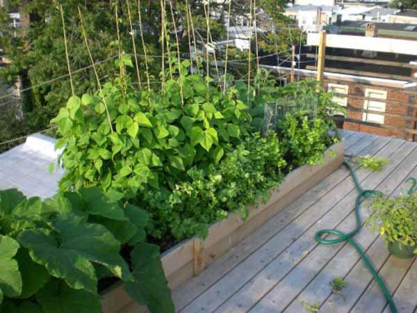 Benessere coltivando l\'orto in balcone - Allianz Global Assistance