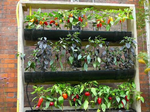 benessere coltivando l'orto in balcone - allianz global assistance - Piccolo Giardino Sul Balcone